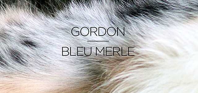 Portrait : Gordon, la fine touche électro…de Villeneuve-sur-Verberie